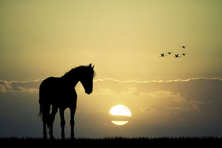 horses in the wild: horse silhouette at sunset Stock Photo