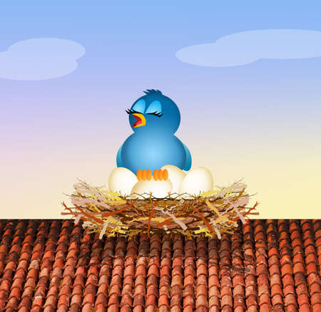 home birth: bird in the nest on roof
