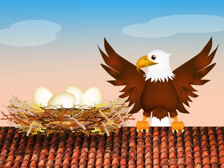 home birth: nest of eagle on roof Stock Photo