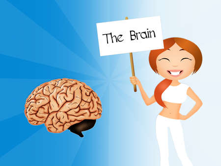 parietal: the brain