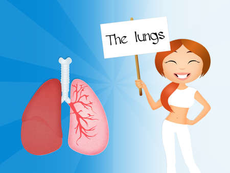 the lungs photo