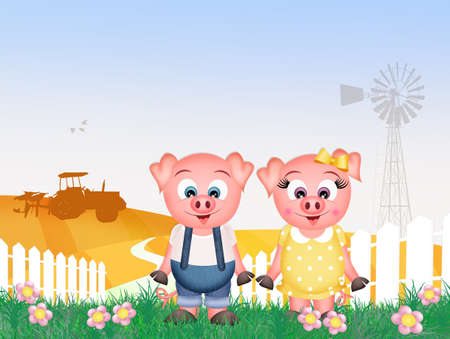 pigsty: pigs in the farm Stock Photo