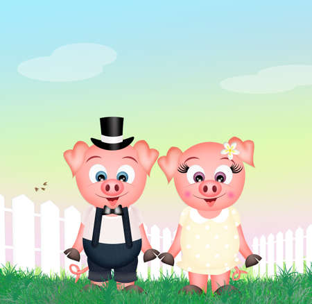 piglets: funny pigs