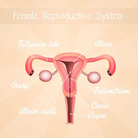 genitals: female genitals Stock Photo