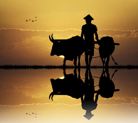 plowing: Asian farmer silhouette at sunset