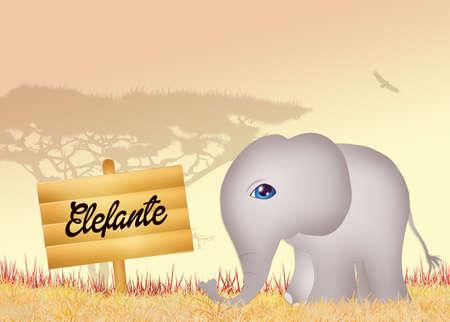 proboscis: elephant