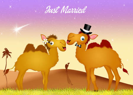 humps: Wedding of camels Stock Photo
