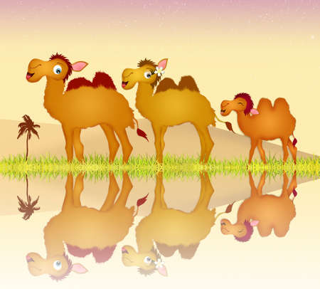 humps: camels family