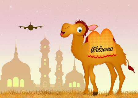 humps: trip to India Stock Photo