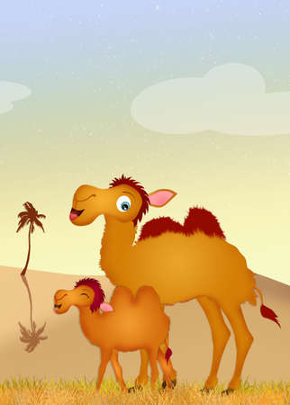 humps: camel and baby camel Stock Photo