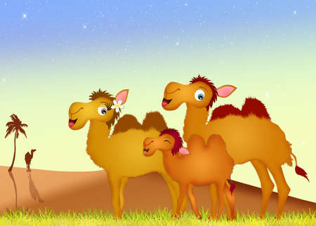 sand dune: family camels