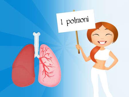 alveolos: los pulmones Foto de archivo