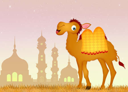 humps: camel in the mosque