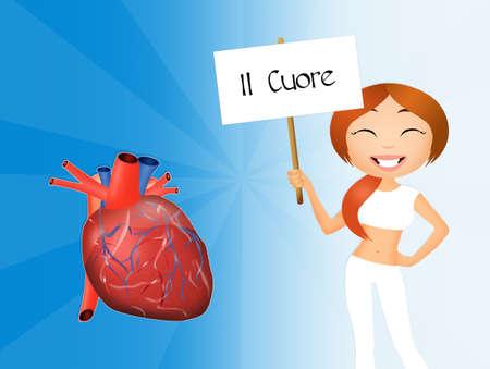 donacion de organos: el corazón  Foto de archivo