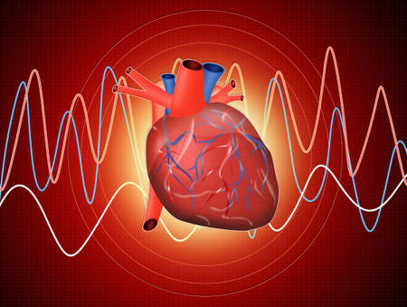 ventricle: The heart Stock Photo