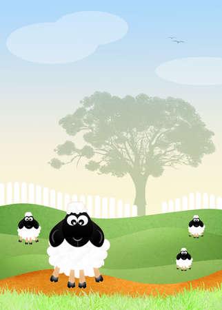 irish landscape: Sheeps in the field