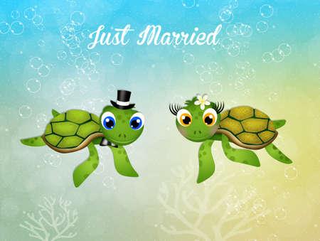 sea turtle: Wedding of sea turtle