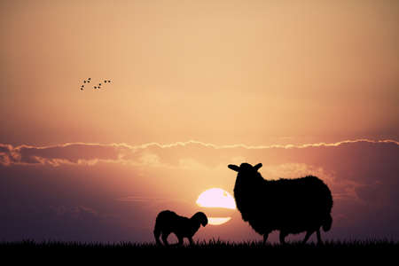 grazing: sheep grazing at sunset