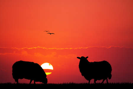 sheeps: sheeps silhouette at sunset