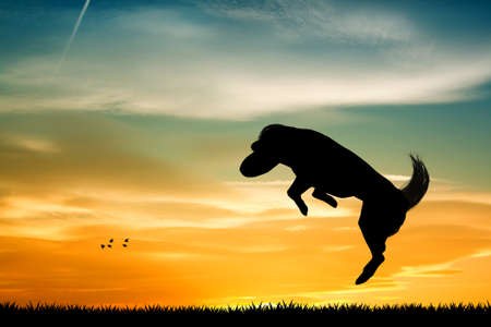 happiness people silhouette on the sunset: Dog with frisbee Stock Photo