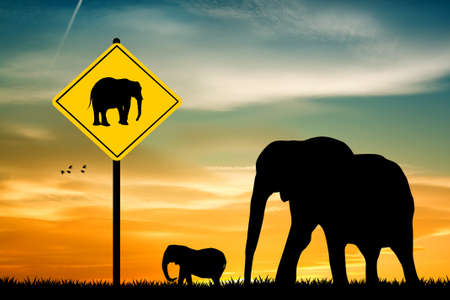 crossing: attention Elephant Crossing Stock Photo