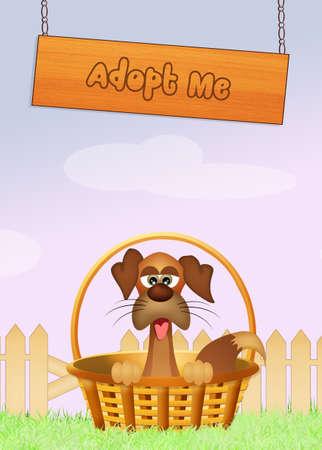 zooth�rapie: adopter un chien Banque d'images