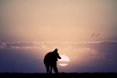 lament: wolf at sunset