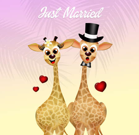coupling: Wedding of giraffe