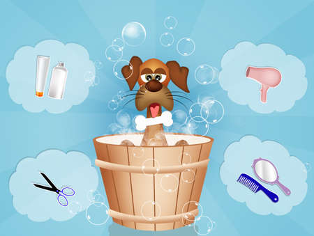 grooming: dog grooming Stock Photo