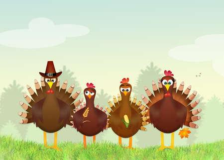 turkeys: Funny turkeys