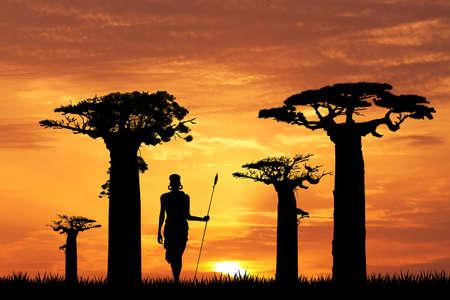 masai: baobab silhouette at sunset