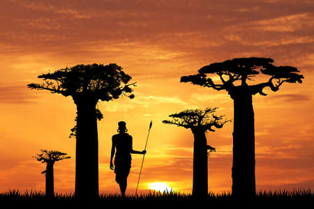 baobab silhouette at sunset