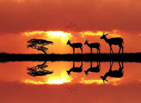 gazelle: gazelle in African landscape