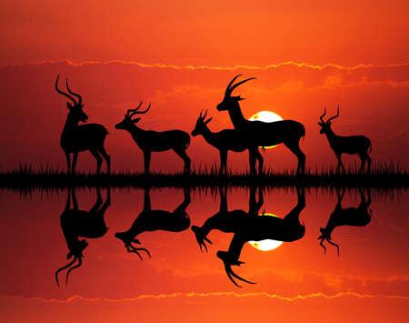 paisagem: silhueta gazela na paisagem Africano