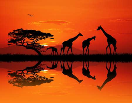 giraffe silhouette: giraffe silhouette in African landscape