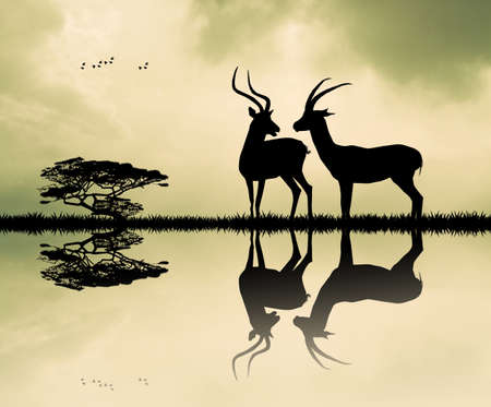gazelle: gazelle at sunset