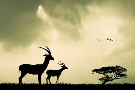 gazelle: gazelle silhouette at sunset