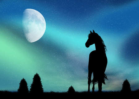 northern lights: horse and Northern Lights