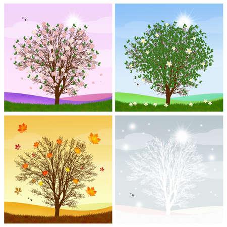 four season: tree in the four season Stock Photo