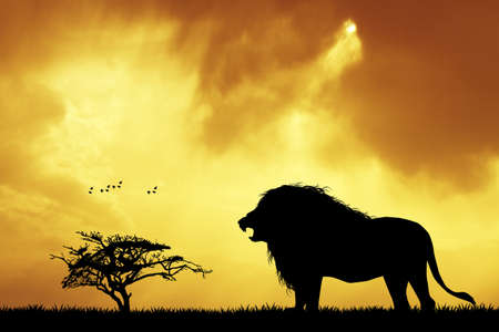 lion silhouette: Lion silhouette at sunset