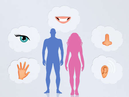 senses: the five senses in the human body