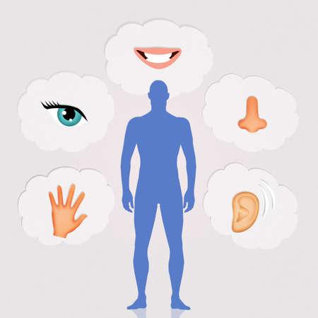 of the senses: five senses