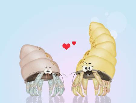 hermit crabs: hermit crabs in love