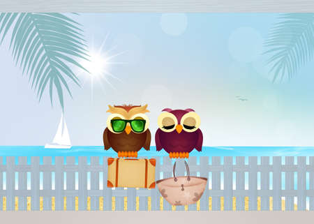 couple in summer: owls couple on summer holidays