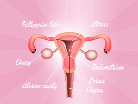Vaginal Stock Photo