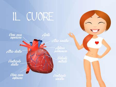 transplant: Human heart