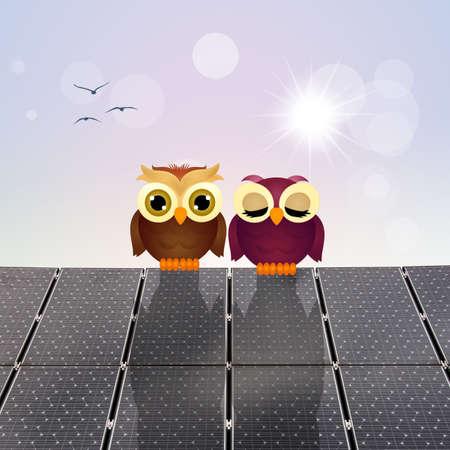 panels: owls on solar panels