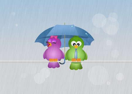free fall: birds in the rain