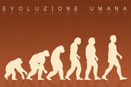 origin of man: Human evolution