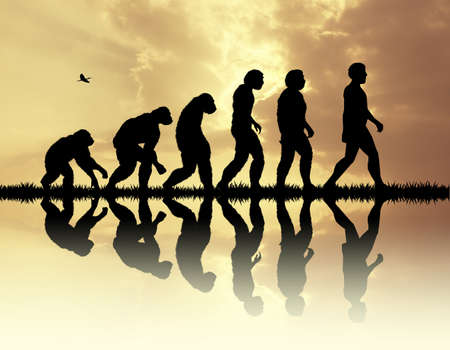 origen animal: La evolución humana  Foto de archivo